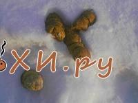 Какашка Ландыши на снегу