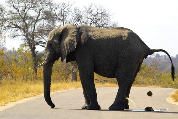 В комментах столько не срут сколько срет слоник