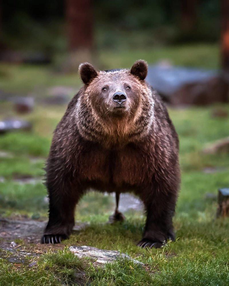 Многие наверное видели мем где медведь вытирает жопу зайцем У которого говно к шерсти не прилипает