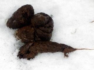 Подросток наложил кучу говна на снежок